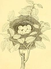 Anglų lietuvių žodynas. Žodis canarybird flower reiškia canarybird gėlių lietuviškai.