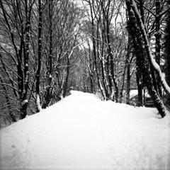 Winter in Grfrath (somekeepsakes) Tags: schnee winter blackandwhite bw snow 120 monochrome analog mediumformat square toycamera diana sw analogue monochrom solingen 2010 quadratisch mittelformat schwarzweis grfrath fujineopannp400pr