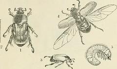 Anglų lietuvių žodynas. Žodis scale-winged reiškia zool.  n žvynasparniai (vabzdžiai)  a žvynasparnis lietuviškai.