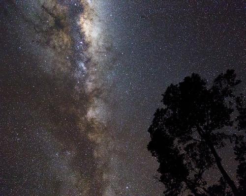 newzealand stars astrophotography nightsky pohutukawa southernhemisphere metrosiderosexcelsa ef24105mmf4lisusm okato milkywaygalaxy galacticcentre greatrift darkhorsenebula dcysurfer canoneos6d pipenebula ccby40 ophiuchusconstellation