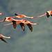 Firebirds in flight!