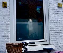 De kat in het spookhuis (Roel Wijnants) Tags: roelwijnants roelwijnantsfotografie roel1943 kat poes kater trapje raam kijken skelet schedel straat
