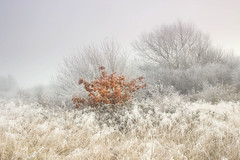 Autumn Colour In The Frost (Julian Barker) Tags: autumn colour frost winter freezing sawley hemington lockington grounds meadow fog mist contrast odd one out ethereal ice england uk nottingham julian barker canon