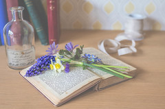 1/30: Like an open book... (judi may) Tags: april2017amonthin30pictures flowers stilllife table wood tabletopphotography books book bottle ribbon stems muscari canon7d 35mm soft bokeh dof depthoffield softness