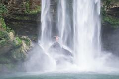 Palenque Misol Ha Falls-9