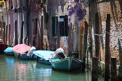 (latositti) Tags: latositti venise venice venecia venedig venezia veneto glicine wisteria