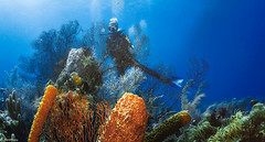 Another World (jnhPhoto) Tags: belize2017 jnhphoto reef corals coralreef scuba scubadiving belize sponges colorful blue