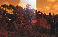 extraterrenean canyon (m_travels) Tags: canyon trees surreal lightleak analog technique redscale homemade selfmade diy lomography800 reversesideofthefilm 35mmfilm argentique filmphotography experimental flippedfilm mood