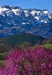 Ja arriva la primavera a Prullans / Spring is coming at Prullans (SBA73) Tags: catalunya catalonia catalogne catalogna katalonien cataluña каталония 加泰罗尼亚 mountain pirineus pirineos pyrenees cerdanya cadí range wall mighty huge large snow muntanya montaña spectacular prullans cliffs hivern invierno winter primavera spring neu nieve schnee platinumheartaward