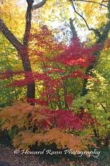 Fairmount Park (167) (Framemaker 2014) Tags: fairmount park japanese tea house philadelphia pennsylvania united states america