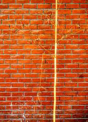 LifeLine.jpg (Klaus Ressmann) Tags: klaus ressmann omd em1 abstract color m50 prc shanghai summer wall bamboo brick design flcabsoth minimal pattern red klausressmann omdem1