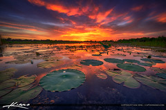 Sunset at a Lake in Kissimmee Florida (Captain Kimo) Tags: captainkimo easyhdr florida hdrphotography kissimmee luminar osceolacounty sunset