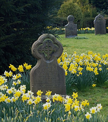 2017_03_0391 (petermit2) Tags: stmichaelandallangelschurch stmichaelandallangels church brodsworthhall brodsworth doncaster southyorkshire yorkshire englishheritage heritage cemetary graveyard gravestone grave daffodil spring