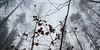 rotbuchenwald im nebel 0617 (s.alt) Tags: treesinfog copperbeech beechtree beech rotbuche rötlichefärbung rot rote blätterbuchenwaldherbstverfärbungbeautifulwide angle wide rotbuchenwald nebel fog roteblätter buchenwald beautiful ast äste astwerk geäst zweige natur feucht struktur nature natureunveiled winter silhouette tree baum structure texture detail branch kalt morgen bäume winterforest europa bayern laubbaum buche fagus silence plant