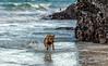 Stornoway Feb-17-2617 (MilkWoodPhotography) Tags: stornoway isleoflewis isleofharris outerhebrides scotland ullapool butt lewis beach minch