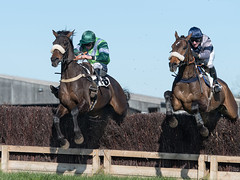 The last fence and the race is on (Steve Barowik) Tags: yorkraces racecourse grandstand horse jockey trainer groom cropframe saddle plate whip hunter chaser hound pointtopoint point2point stevebarowik barowik 70200mmf28vrii jorvik ebor eboracum jump fence hurdle canter hack sbofls26 nikond500 quantumentanglement wonderfulworld unlimitedphotos flickrelite dx badsworthbramhammoor hunt askhambryan