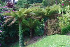IMG30189a_C (Kernowfile) Tags: glendurgangarden plants trees flowers