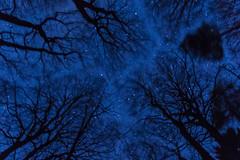 Sterne im Wald (thieschi) Tags: nachtlaurindavidbadessenaussichtsturm sonyslta77tamron badessen niedersachsen deutschland night sony slt a77 tamron 1750