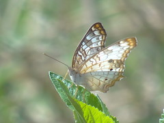 DSC00405 (familiapratta) Tags: sony dschx100v hx100v iso100 natureza inseto insetos nature insect insects