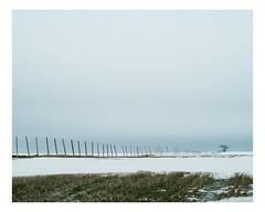 saint-jean-de-l'île d'orléans (Mériol Lehmann) Tags: vscofilm îledorléans landscape tree winter fields snow canada rural quebec fence topographies saintjeandelîledorléans québec ca