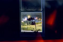 (Patrick J. McCormack) Tags: gw690 cinestill analog film ireland night orchid glow hotel street window 6x9