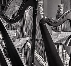 Harps 2 ... ; (c)rebfoto (rebfoto) Tags: harps harpists blackandwhite musicinstruments rebfoto concert stage