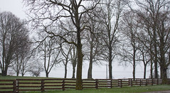 Spring Snowfall, April 2017 (marylea) Tags: apr6 2017 trees fog morning farm commute spring snow rural fence explore explored