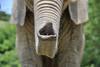 D3X_2366 (Akira Uchiyama) Tags: 動物たちのいろいろ 鼻 鼻アフリカゾウ