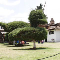 Tzintzuntzan, Michoacan (Manitoba Museum of Finds Art) Tags: tzintzuntzan michoacan topiary