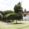 Tzintzuntzan, Michoacan (Manitoba Museum of Finds Art) Tags: tzintzuntzan michoacan topiary