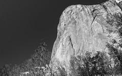 Flying over El Cap (Priscila de Cássia) Tags: elcapitan yosemite yosemiteconnect yosemitenationalpark monolith mountain tree trees nature naturephotography nikon nikond700 blackandwhite california sky landscape prisciladecassia
