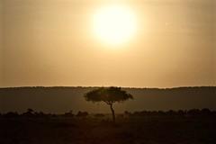 Morning in Masai Mara (The Spirit of the World) Tags: sunrise landscape tree ridge hill sun light kenya masaimara eastafrica africa grassland gamereserve gamepark safari gamedrive morning acaciatree acacia