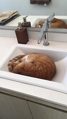 Sleeping beauty - The Caturday (TheCaturday) Tags: caturday kittens kitty cat cats kitten cute catsagram catsoftwitter catsofinstagram