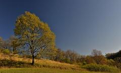 renaissance printanière (jean-marc losey) Tags: france aquitaine lotetgaronne blaymont arbre chêne printemps d700