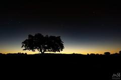 Amanecer en la Sierra de Andujar (MSB.Photography) Tags: andujar sangines landscape amancer sunrise sierradeandujar jaen ruinas ruins arbol tree backlight backlighting contraluz silueta