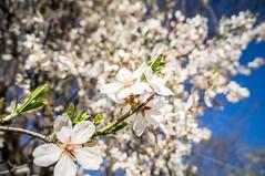 De Blanco (Ivan_Fle) Tags: españa white flores flower blanco spain europe flickr sony flor 1855 emount blinkagain sonynex