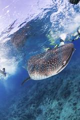 2013 11 VOISIN MALDIVES-2686