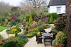 Colours of mid spring in the upper garden (Four Seasons Garden) Tags: uk england flower garden four spring seasons camellia walsall fourseasonsgarden