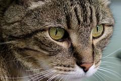 Cat's Eyes (vbd) Tags: cat eyes pentax connecticut ct aficionados 2011 vbd k200d pentaxda55mmf14sdm summer2011