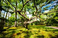 Japanese Garden Clingendael (Tsewang K.) Tags: japan garden japanese 50mm japanesegarden nikon 14 den hague 28 nikkor thehague denhague clingendael 105mm japansetuin d700 1424mm