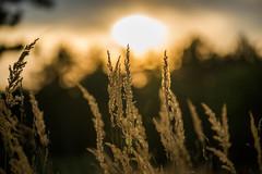 "when Sun goes down ("" Bernhard Witt "") Tags: sunset sun field nationalgeographic sonyalpha850"
