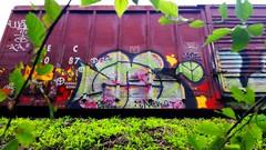 WYSE (BLACK VOMIT) Tags: car train graffiti box rip w jade boxcar d30 freight nekst weezy wyse