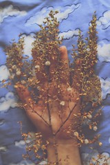 Home (aimarissa) Tags: sky plant home clouds hand body creosote betweenworlds
