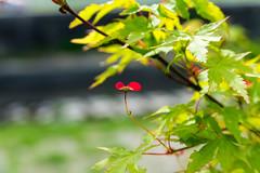 _DSC8096 (Osamu1965) Tags: park flower japan garden landscape spring nikon 28mm nikkor 花 wisteria okayama 公園 28105 105mm d600 和気町 f3545 af28105f3545d 藤公園