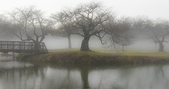 Grey Mist Morning (chantsign) Tags: park morning bridge trees mist reflection water grey bare nomaheganpark