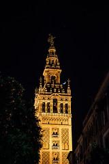 Giralda nocturna (oZopanda - David Cvico) Tags: city travel urban sevilla spain andalucia viajes nocturna giralda
