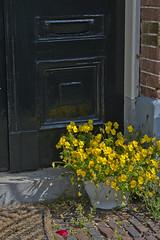 Yellow Flowers At Front Door (Stan Giling www.stangiling.com) Tags: door flowers holland haarlem yellow decoration geel frontdoor bloemen deur threshold voordeur bloempot drempel