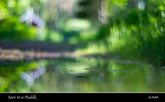 Seen in a Puddle (Nyllet) Tags: sunlight house water grass forest reflections puddle bokeh soil minoltamd5012