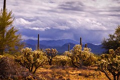 43aStormy Sky Paule Hjertaas (paule48) Tags: arizona usa weather landscape az stormcloud sonorandesert landform arizonausa mountainlandform hwy86ajotucson