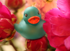 flower power ducky (explored) (Dawn Porter) Tags: